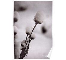 Winter's Garden Poster
