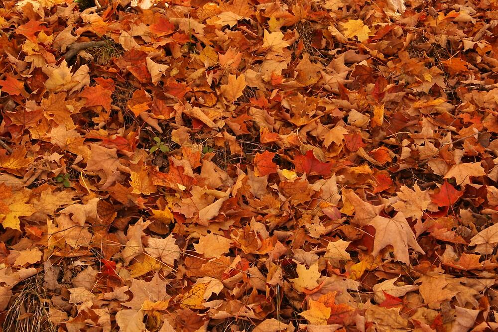 Leaves by John Clarke