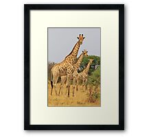 Giraffe Symmetry - African Wildlife Background Framed Print