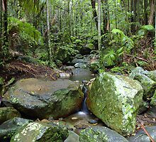 Border Ranges Rainforest by Stephen Kilburn
