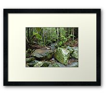 Border Ranges Rainforest Framed Print