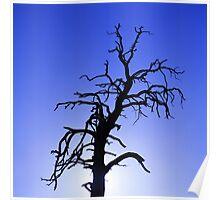 Crazy Tree Poster