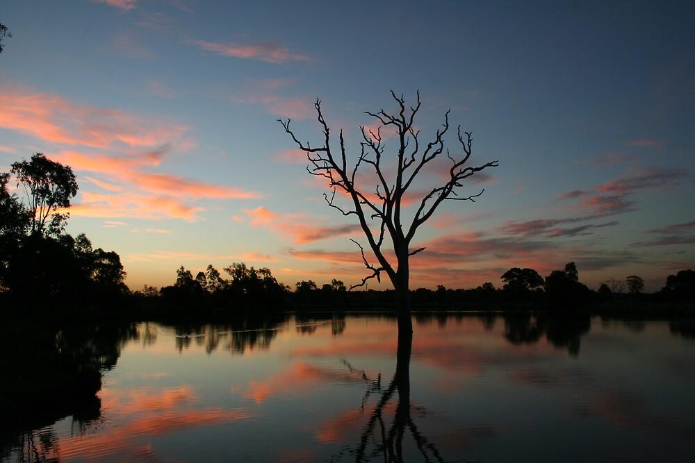 Veins at Sunset by Nathan Thomas