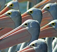 Pelicans 1 by Mark Snelson
