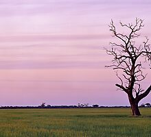 Wimmera Sunset Over Canola by mgimagery