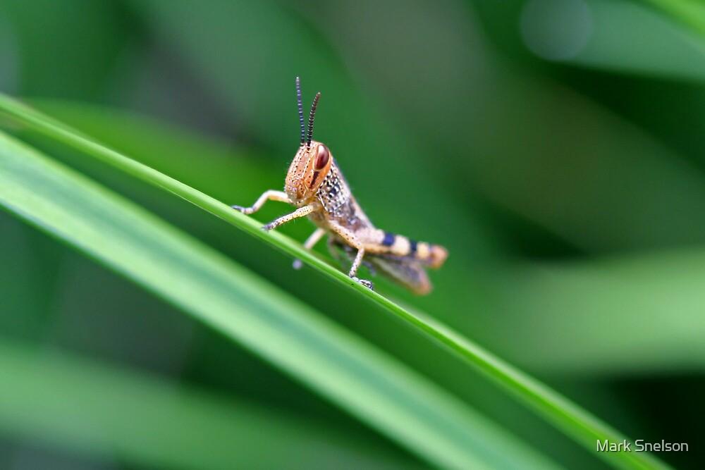 Grasshopper on Grass by Mark Snelson