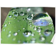 Grass Droplets Poster