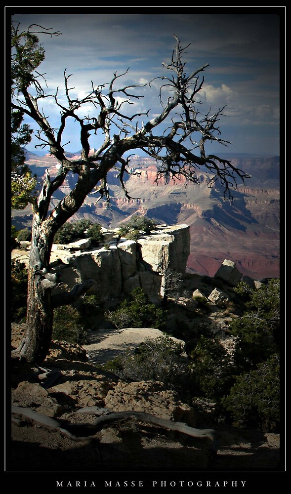 Grand Canyon tree by Maria Masse