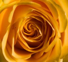 Backlit Yellow Rose Sticker