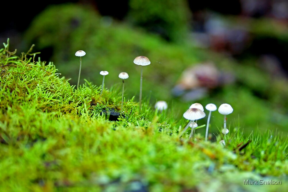 Forest Fungi 2 by Mark Snelson