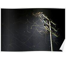 Moth Trails 2 Poster