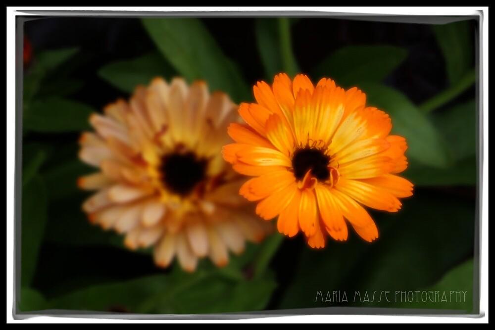 Flower in Alaska by Maria Masse