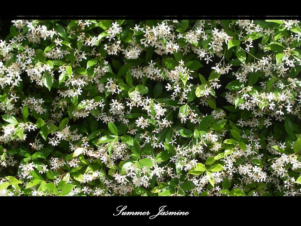 Summer Jasmine by Cre8iveAngel