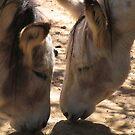 Mules by Jeremy Mawson