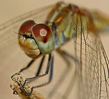 Green Dragonfly 2 by Mark Snelson