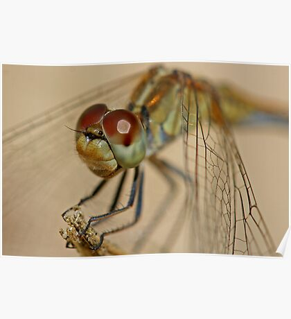 Green Dragonfly 2 Poster