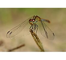 Green Dragonfly 6 Photographic Print