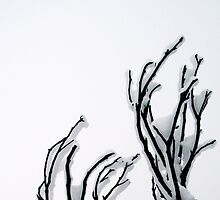 Rime Encrusted Burnt Snowgum by John Barratt