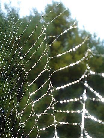 spiderweb by elizabethrose05