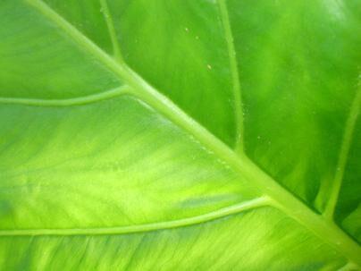 leaf by elizabethrose05