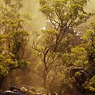 Tree is Mist - Grampians - Victoria by James Pierce