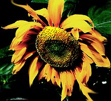 Sunflower by Spartacus