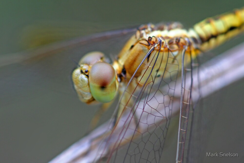 Yellow Dragonfly 2 by Mark Snelson