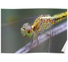 Yellow Dragonfly 2 Poster