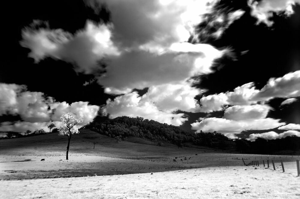 Hunter Valley by Alex Lau