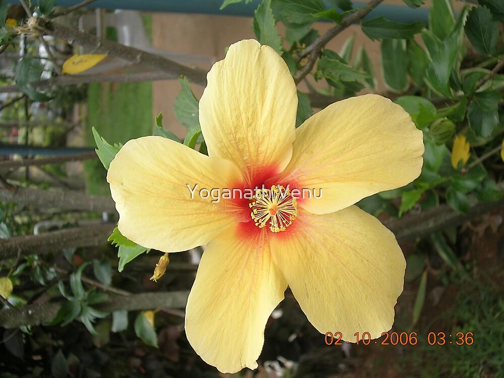Floral by Yoganath Venu