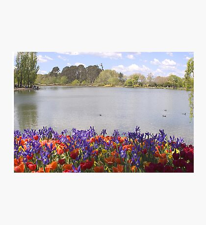 Lake Burley Griffin With Flowers Photographic Print