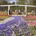 Floriade by Shutterbug