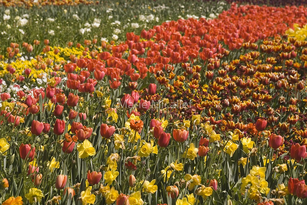 Carpet Of Blooms by Shutterbug