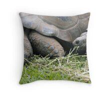 Giant Galapagos Land Tortoise Throw Pillow