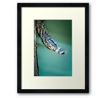 Monitoring the Situation.... Framed Print