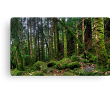 Torc forest Canvas Print