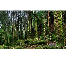 Torc forest Photographic Print