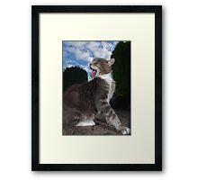 Tabby cat licking fur Framed Print