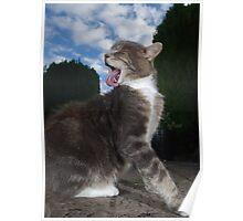 Tabby cat licking fur Poster