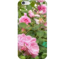 Pink Roses in the Garden iPhone Case/Skin