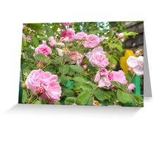 Pink Roses in the Garden Greeting Card