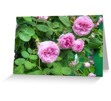 Pink Roses in the Garden 2 Greeting Card
