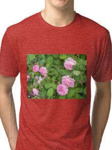 Pink Roses in the Garden 5 Tri-blend T-Shirt