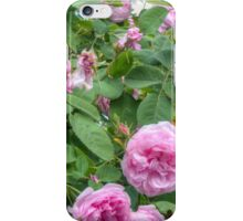 Pink Roses in the Garden 6 iPhone Case/Skin