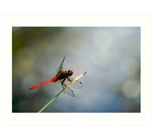 Red Dragonfly 2 Art Print