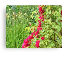 Red Climbing Roses 2 Canvas Print