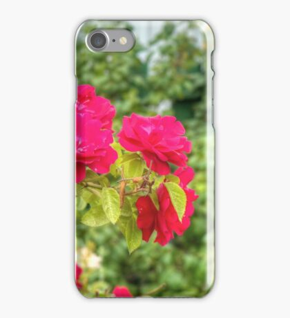 Red Climbing Roses 3 iPhone Case/Skin