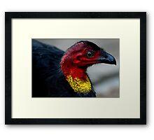 Australian Brush Turkey Framed Print