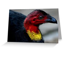 Australian Brush Turkey Greeting Card