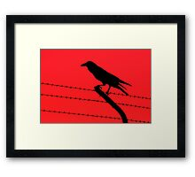Barbed Wire Crow Framed Print